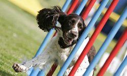Agility - Spaß und Sport für Mensch und Hund